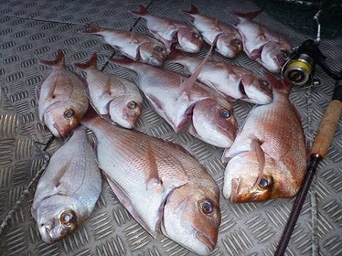 How to Catch Snapper in Deep Water | The Hook and The Cook