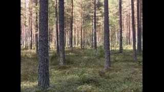 Metsä - Suomalainen sielunmaisema