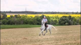 Ах, вы кони, мои кони!