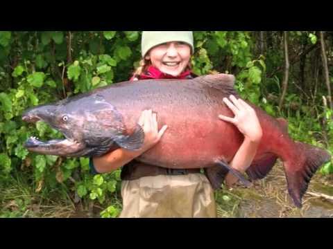 salmon run sauvignon blanc marlborough