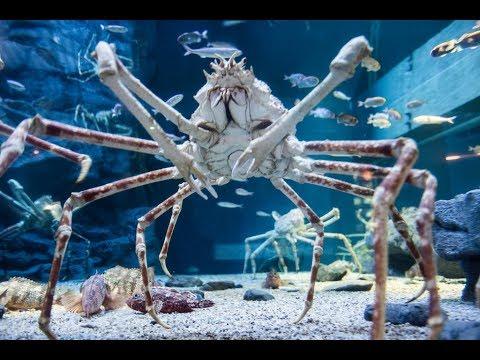 Top 10 Scariest & Terrifying Animals Around The World