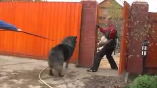Самые  хорошие , сильные ,  надёжные собаки !!!