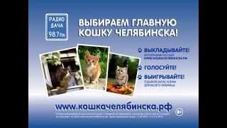 Разыскивается Главная кошка Челябинска
