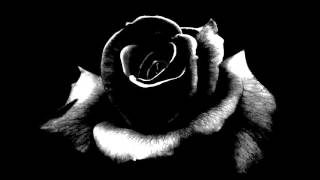 cr7z schwarze rosen