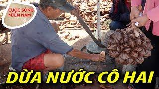 Ở đâu bán dừa nước ngon & nhiều ( Cách Sài Gòn 30km) #namviet