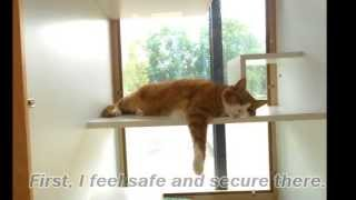 Cat Boarding: Why Cats like Luxury Boarding Facility, Wilsonville, OR