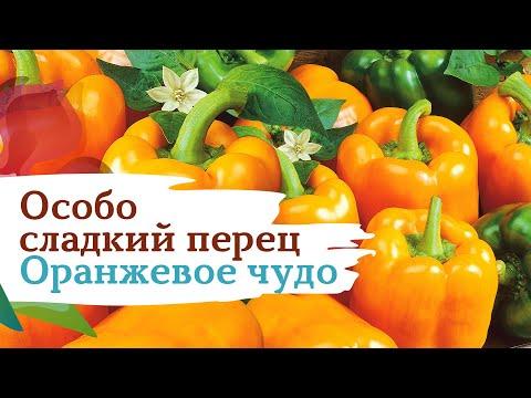 Сладкий перец Оранжевое чудо. Особо сладкий | оранжевое | сладкий | семена | россии | огород | перец | чудо | сады | дача | сад