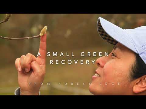 森歩き日記 Vol.18「A Small Green Recovery」