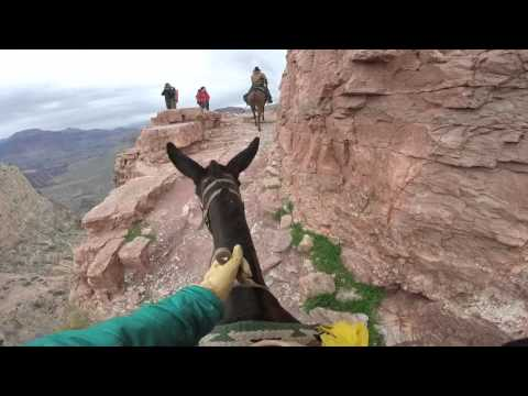 """Skeleton Point"" Grand Canyon Mule Ride"