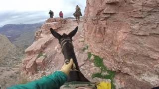 """""""Skeleton Point"""" Grand Canyon Mule Ride"""