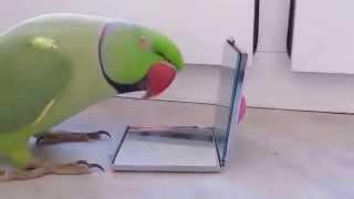 Умный попугай видео. Смешные птицы