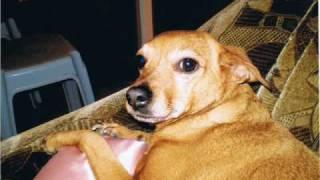 Агата.В память о горячо любимой собаки
