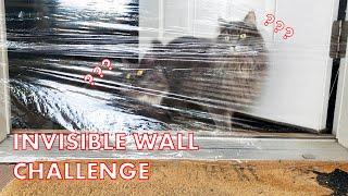 CATS vs INVISIBLE WALL