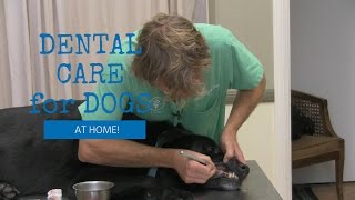 Dental Cleaning For Dogs At Home