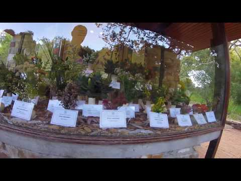 Kirstenbosch Botanical Gardens 20