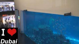 Аквариум в торговом центре Dubai Mall(Аквариум в торговом центре Dubai Mall Подписывайся на новые видео нашего канала https://www.youtube.com/user/DubaiIlove Наш канал..., 2013-11-24T16:49:45.000Z)