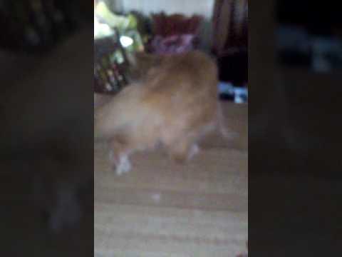 Horny kitty 2