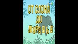 От слона до муравья. 21  Земноводные.  Амфиума. Образовательное видео для детей.