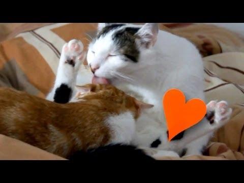 'Gay' Cats :D