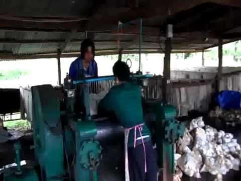 การทำยางเครพของเกษตรกร จ.หนองคาย3