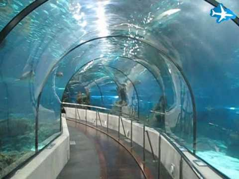 Barcelona Aquarium Youtube