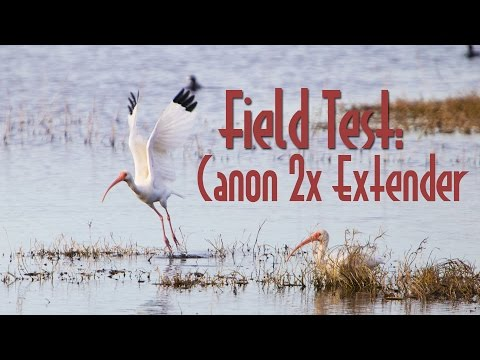 Field Testing the Canon 2x Extender in Merritt Island Wildlife Refuge