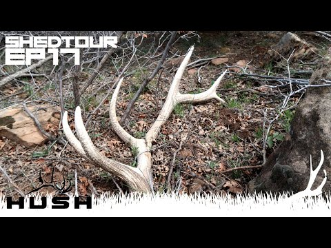 THE DUMBEST SHED HUNT EVER, BUT I FOUND SOME!