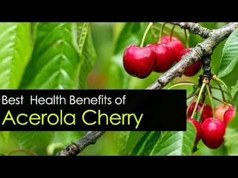 Acerola Cherry Benefits Powder, Extract, and Seeds