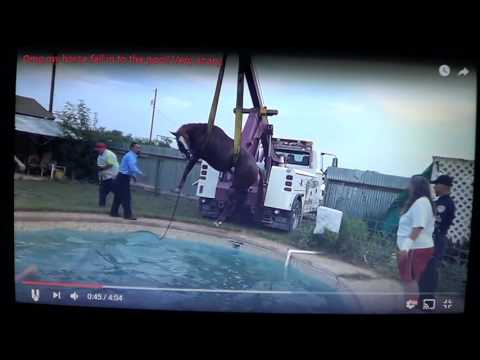 Horse Trapped In Pool - Somehow Rescued By Dumb Luck & Poor Planning