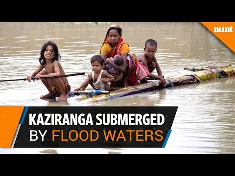 Kaziranga Wildlife Sanctuary submerged by flood waters