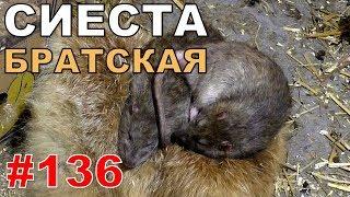 """#136. Реалити Шоу """"ALCARATZ"""". ДОМ 2 - Крысы. Братская Сиеста"""