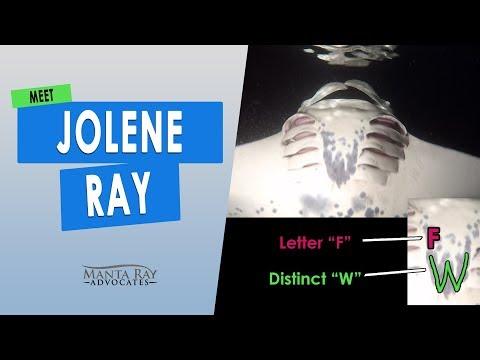 jolene-,-jolene,-jolene,-jolene-ray