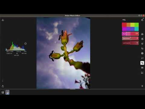Basic, Simple, Quick Photo Editing In Polarr Photo Editor