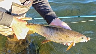 GRAYLING ON THE FLY AT FRONTIER FISHING LODGE