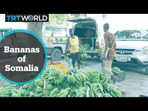 Mogadishu startup tries to revive banana export industry