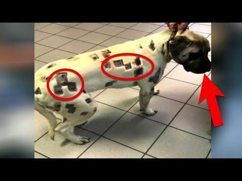 Kadın Köpeğini Böcek Isırdı Sandı Ama Korkunç Gerçeği Sonradan Fark Etti