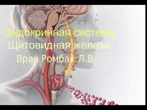 Зндокринная система  Щитовидная железа  Врач Ромбак Л В
