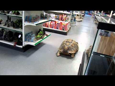 giant-tortoise-at-the-quakertown-farmer's-market