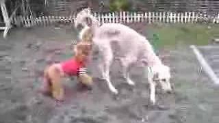Goro@welsh Corgi 20061004 Poodle Saluki Jack Russell Terrier