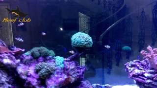 Морской аквариум киев от Рифклуб (Reef-club)(Недавно закончили проект морского аквариума. Аквариум не просвет в гостинной дома. Множество кораллов..., 2016-01-23T11:21:34.000Z)