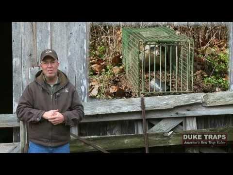 Deer Hunting: Spike Bucks, Cull or Let Them Grow? (#105) @GrowingDeer.tv