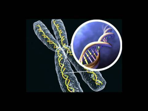 Genetic Birth Defects (Baby Health Guru)