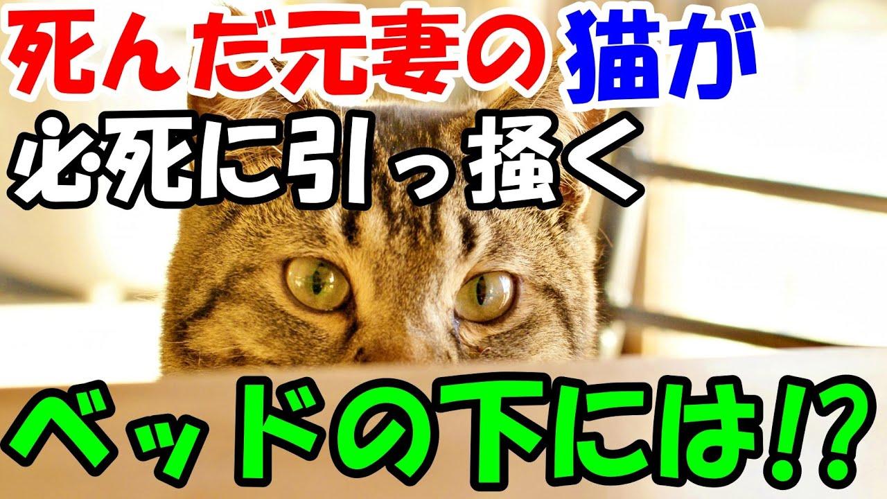 亡くなった元妻から猫を引き取ってほしいという遺言が。ある日猫が必死に引っ掻くマットレスをめくって驚愕【猫の不思議な話】【朗読】