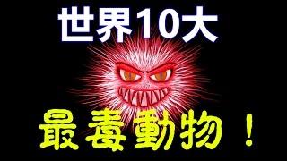 世界10大最毒動物-史上10大最毒生物,千萬別碰!!Top 10 Most Poisonous Animals in the World.