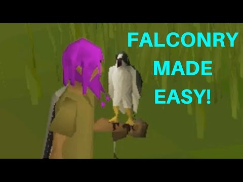 OSRS Falconry guide MADE EASY!