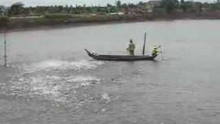 Feeding tra catfish, Mekong Delta, Vietnam