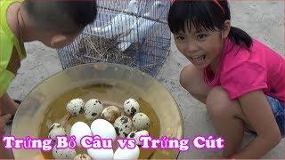 So Sánh Trứng Bồ Câu và Trứng Cút Loại Nào Ngon Hơn [ FPL CHANNEL ]
