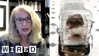 Neuroscientist Explains Why These Rats Drive Tiny Cars | WIRED