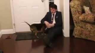 Собака встречает хозяина которого не видела 2 года