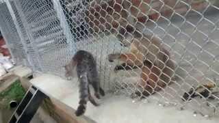 Обезьянка вычесывает блох у кота